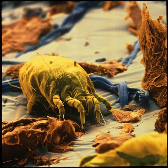 Le bicarbonate de soude est un anti acariens efficace (et utile contre les allergies)