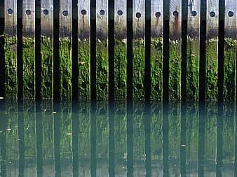 Les algues peuvent aussi s'accrocher un peu partout dans la piscine
