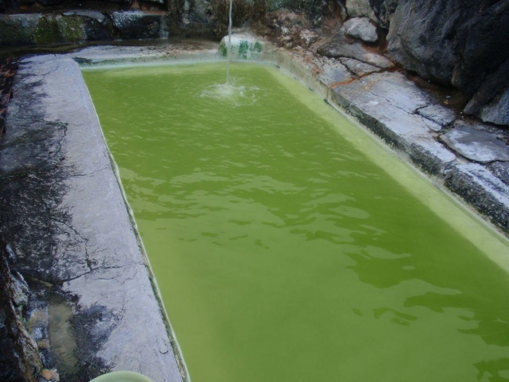 Algues vertes dans la piscine: à votre bicarbonate !