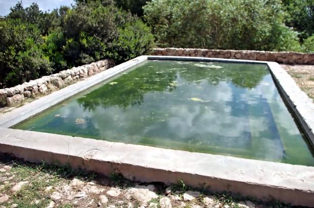 Les algues vertes sont fréquentes dans les piscines