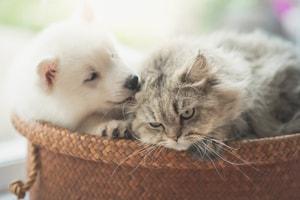 Assainir et désodoriser le panier du chien et du chat