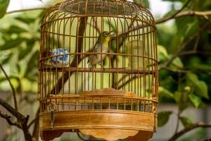 Assainir et désodoriser les cages et les nids à oiseaux