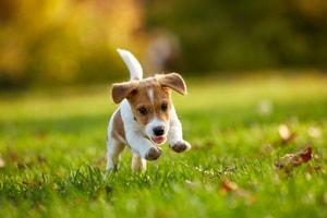 Shampoing sec pour chien (limite les odeurs et éloigne les parasites)