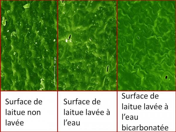 Le bicarbonate de soude lutte contre la bactérie tueuse e. coli
