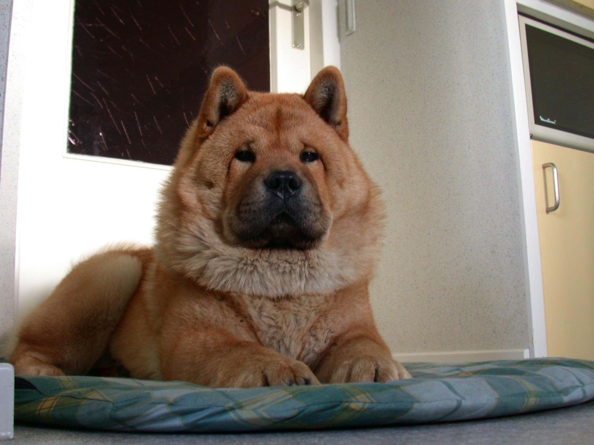 Shampoing sec pour chien limite les odeurs et loigne les for Acheter piscine pour chien