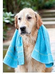 D sodoriser et nettoyer efficacement les poils du - Odeur de chien et bicarbonate ...